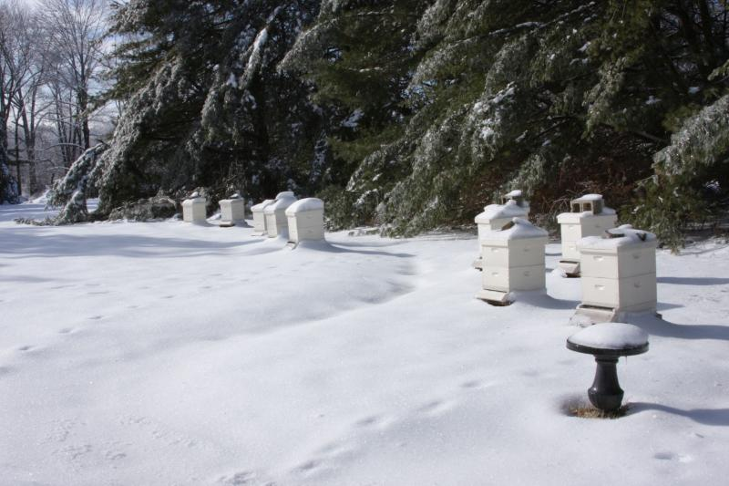Hives during a snowy winter